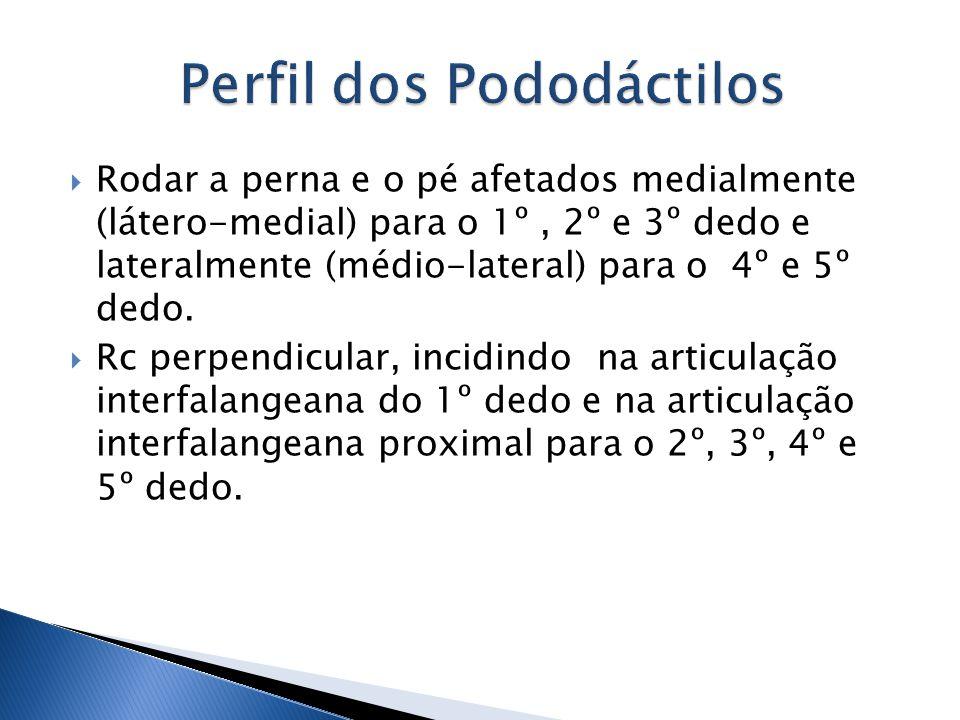 Rodar a perna e o pé afetados medialmente (látero-medial) para o 1º, 2º e 3º dedo e lateralmente (médio-lateral) para o 4º e 5º dedo. Rc perpendicular