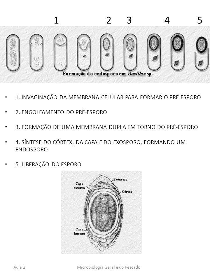 1 2 3 4 5 1. INVAGINAÇÃO DA MEMBRANA CELULAR PARA FORMAR O PRÉ-ESPORO 2. ENGOLFAMENTO DO PRÉ-ESPORO 3. FORMAÇÃO DE UMA MEMBRANA DUPLA EM TORNO DO PRÉ-