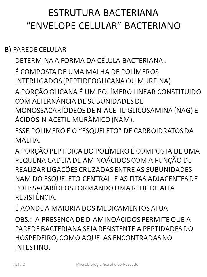 ESTRUTURA BACTERIANA ENVELOPE CELULAR BACTERIANO B) PAREDE CELULAR DETERMINA A FORMA DA CÉLULA BACTERIANA. É COMPOSTA DE UMA MALHA DE POLÍMEROS INTERL