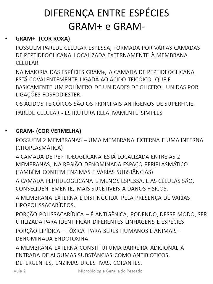 DIFERENÇA ENTRE ESPÉCIES GRAM+ e GRAM- GRAM+ (COR ROXA) POSSUEM PAREDE CELULAR ESPESSA, FORMADA POR VÁRIAS CAMADAS DE PEPTIDEOGLICANA LOCALIZADA EXTER