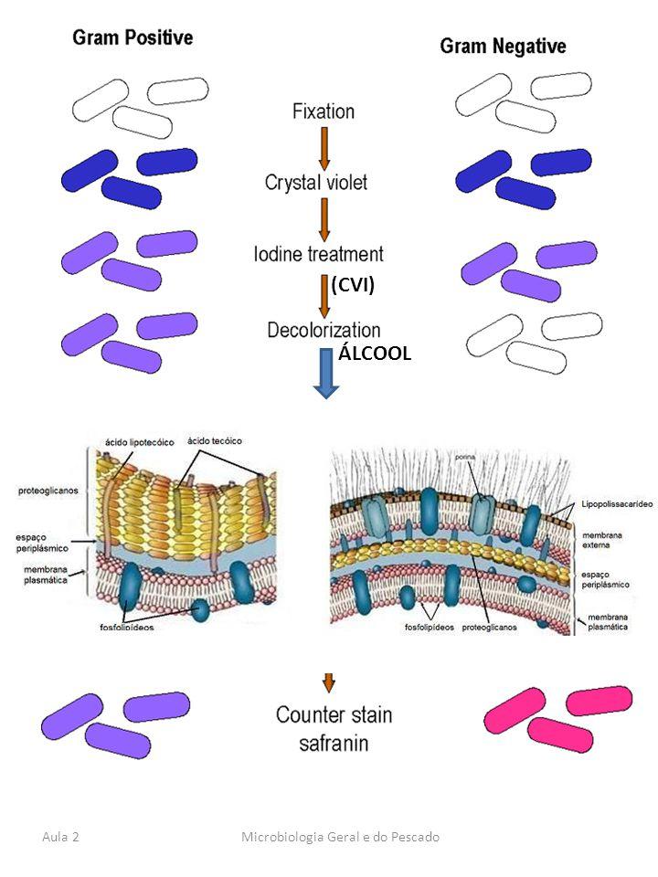 Aula 2Microbiologia Geral e do Pescado (CVI) ÁLCOOL