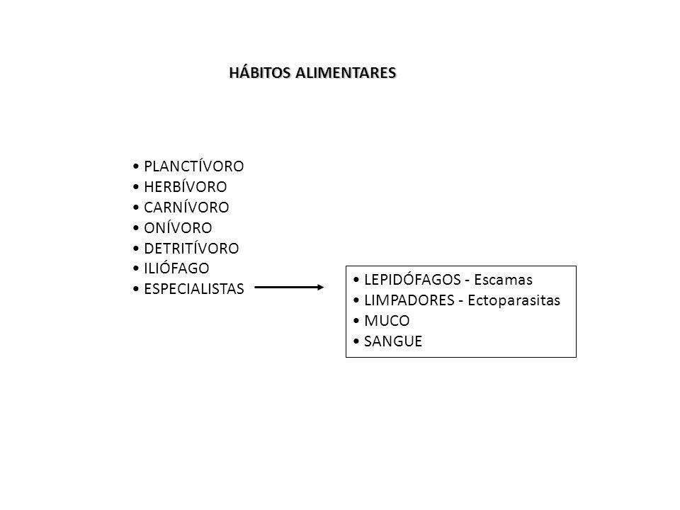 HÁBITOS ALIMENTARES PLANCTÍVORO HERBÍVORO CARNÍVORO ONÍVORO DETRITÍVORO ILIÓFAGO ESPECIALISTAS LEPIDÓFAGOS - Escamas LIMPADORES - Ectoparasitas MUCO S