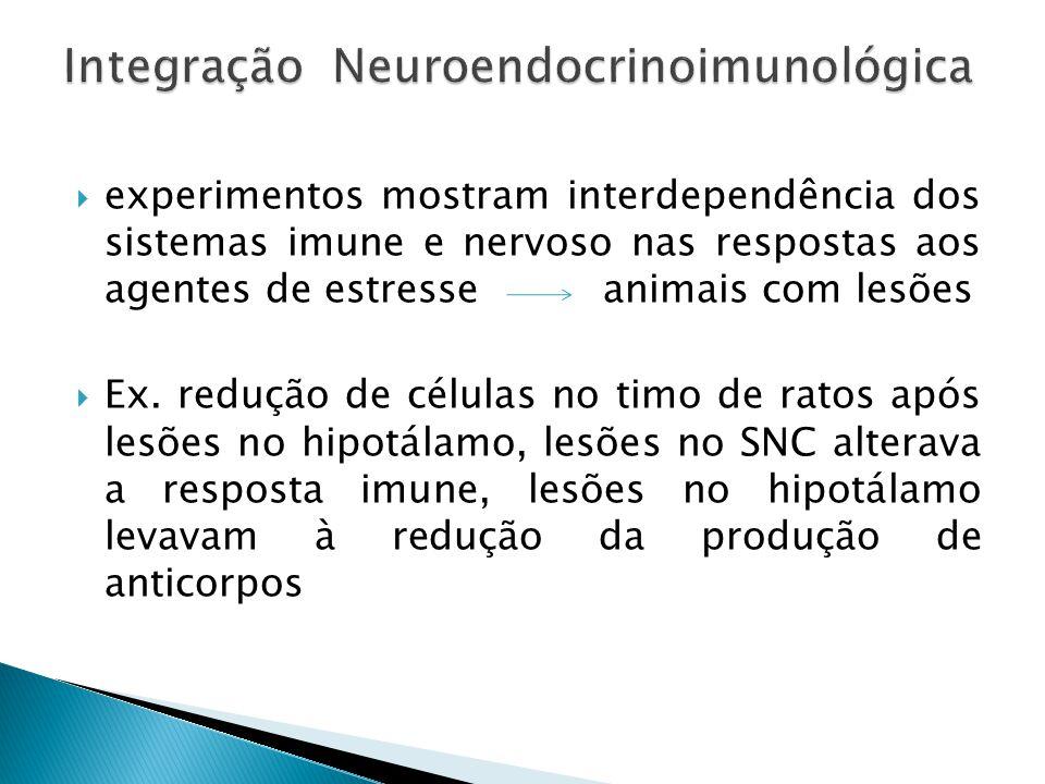 experimentos mostram interdependência dos sistemas imune e nervoso nas respostas aos agentes de estresse animais com lesões Ex. redução de células no