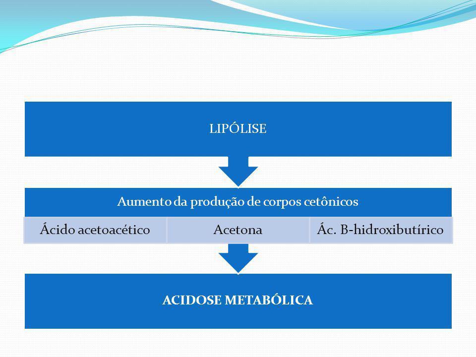 FISIOPATOLOGIA Assim, a deficiência de insulina leva a uma hiperglicemia (devido a uma diminuição da utilização periférica e ao aumento da produção hepática de glicose) e à acidose devido à produção de corpos cetônicos pelo fígado.