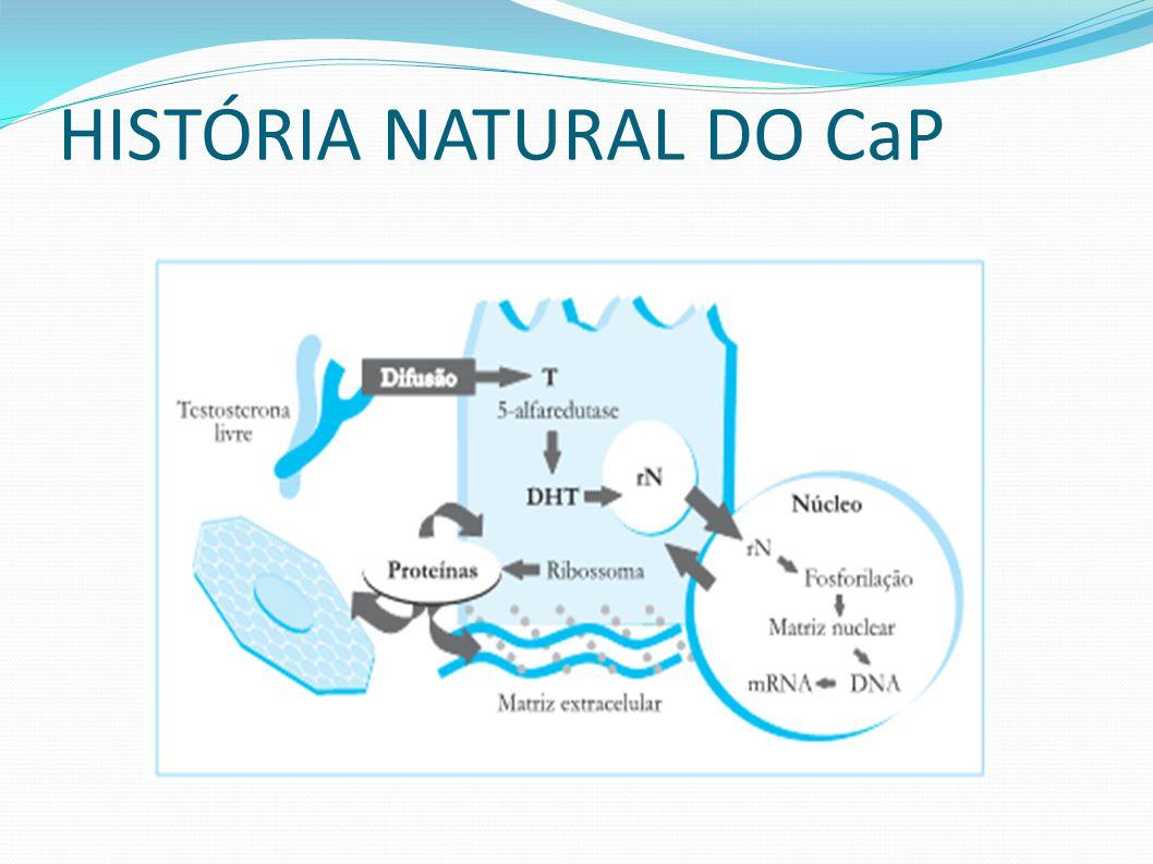 TESTOSTERONA proliferação da célula neoplásica progressão da doença Castração na puberdade tem menor incidência de CaP