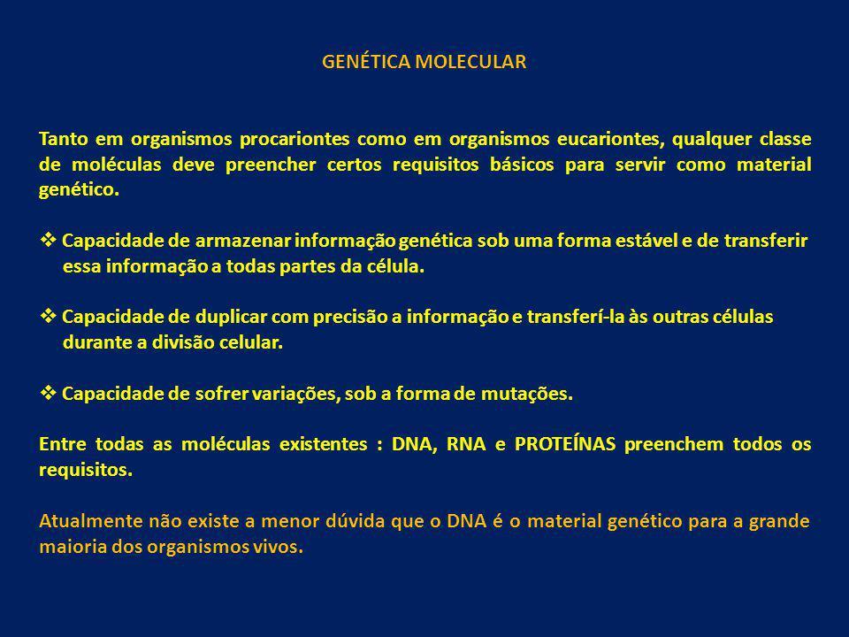 GENÉTICA MOLECULAR Tanto em organismos procariontes como em organismos eucariontes, qualquer classe de moléculas deve preencher certos requisitos bási