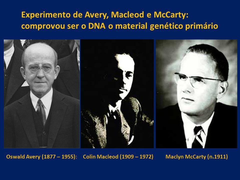 Colin Macleod (1909 – 1972)Maclyn McCarty (n.1911)Oswald Avery (1877 – 1955): Experimento de Avery, Macleod e McCarty: comprovou ser o DNA o material