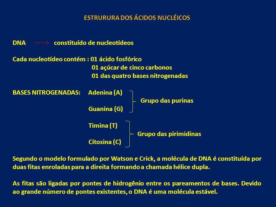 ESTRURURA DOS ÁCIDOS NUCLÉICOS DNA constituído de nucleotídeos Cada nucleotídeo contém : 01 ácido fosfórico 01 açúcar de cinco carbonos 01 das quatro