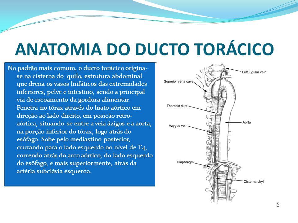 ANATOMIA DO DUCTO TORÁCICO No padrão mais comum, o ducto torácico origina- se na cisterna do quilo, estrutura abdominal que drena os vasos linfáticos