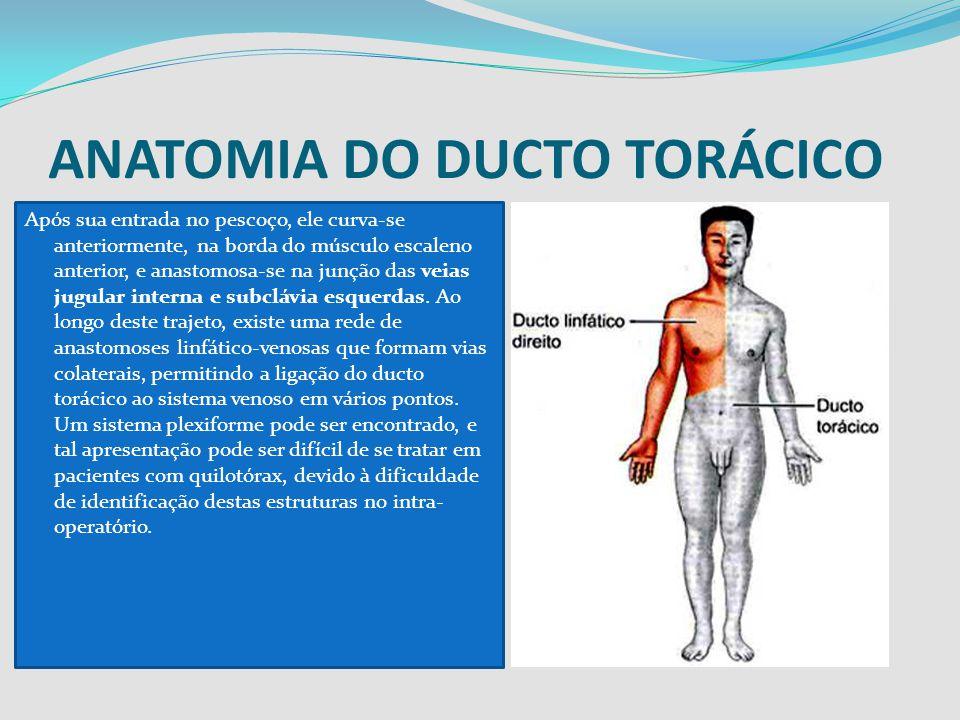 ANATOMIA DO DUCTO TORÁCICO Após sua entrada no pescoço, ele curva-se anteriormente, na borda do músculo escaleno anterior, e anastomosa-se na junção d