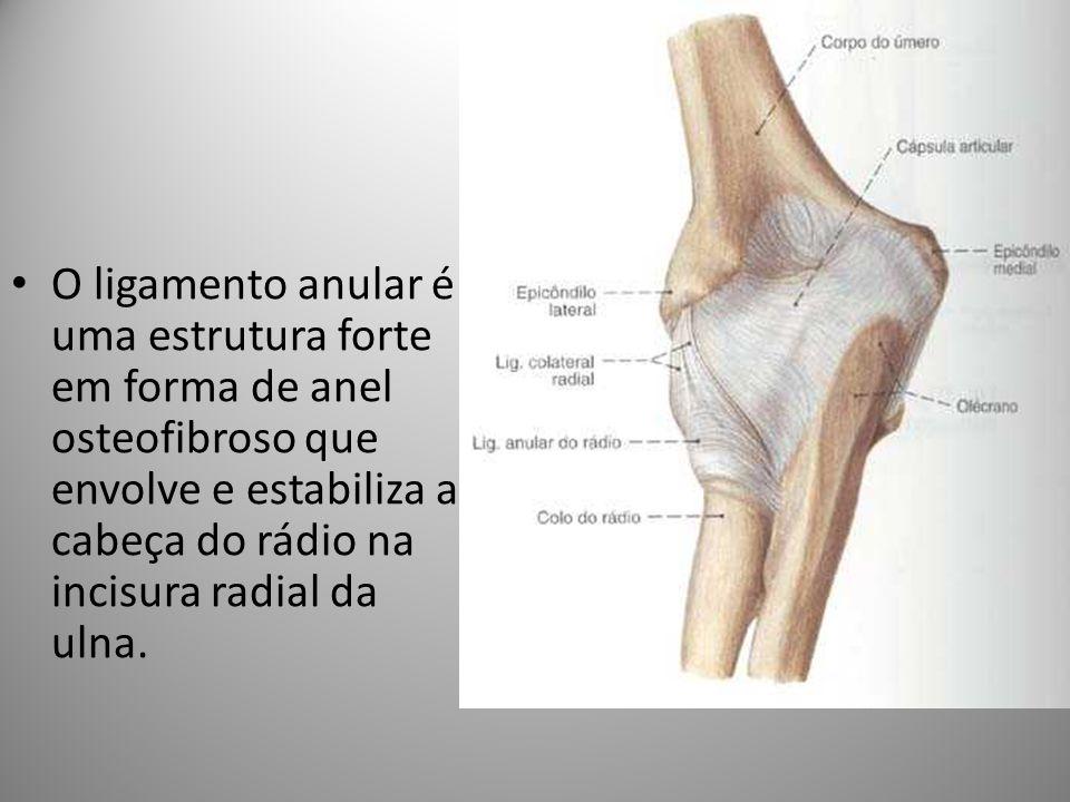 O ligamento anular é uma estrutura forte em forma de anel osteofibroso que envolve e estabiliza a cabeça do rádio na incisura radial da ulna.