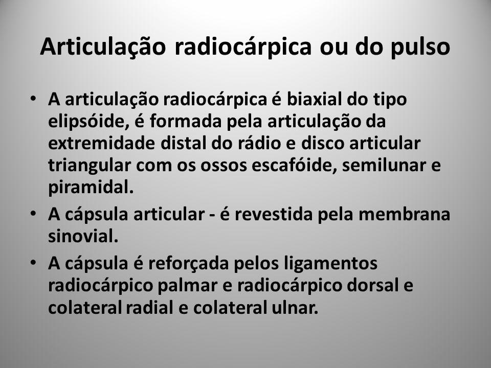 Articulação radiocárpica ou do pulso A articulação radiocárpica é biaxial do tipo elipsóide, é formada pela articulação da extremidade distal do rádio e disco articular triangular com os ossos escafóide, semilunar e piramidal.