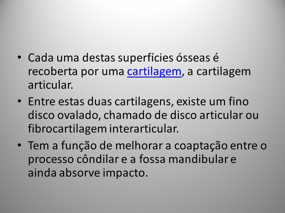 Cada uma destas superfícies ósseas é recoberta por uma cartilagem, a cartilagem articular.cartilagem Entre estas duas cartilagens, existe um fino disco ovalado, chamado de disco articular ou fibrocartilagem interarticular.