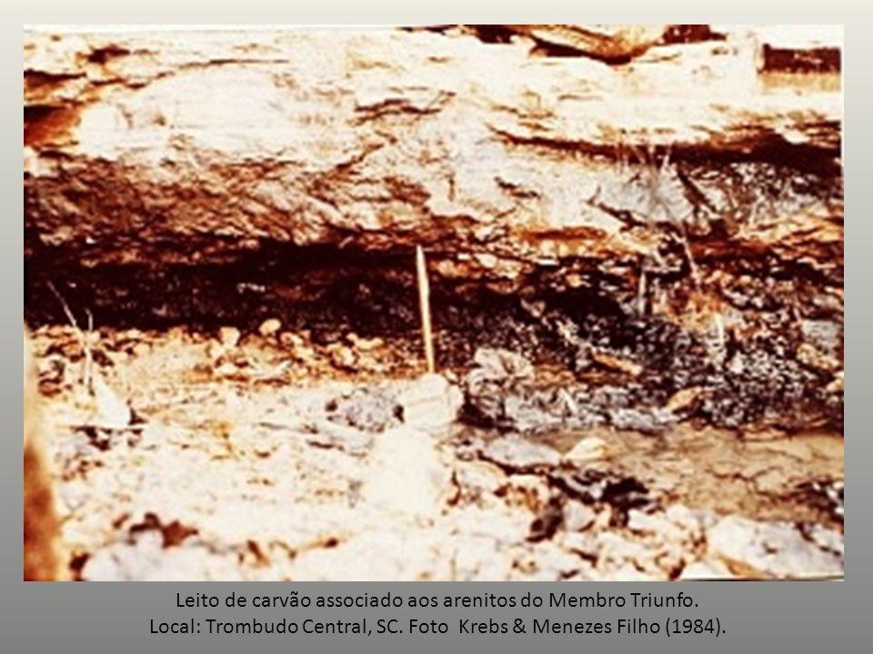 Leito de carvão associado aos arenitos do Membro Triunfo. Local: Trombudo Central, SC. Foto Krebs & Menezes Filho (1984).