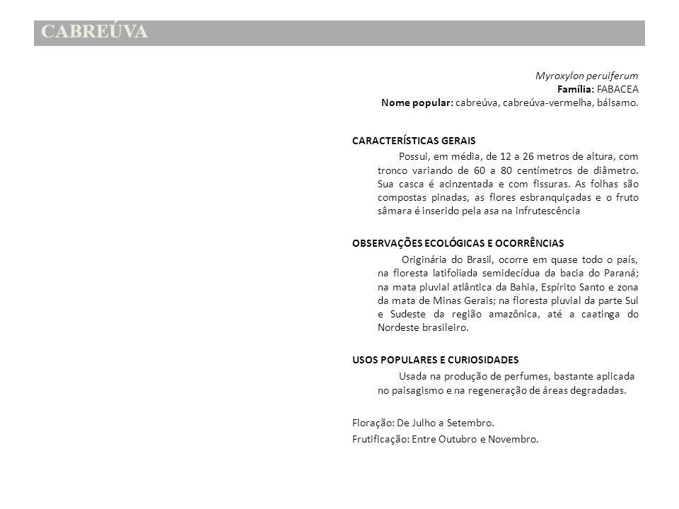 CABREÚVA Myroxylon peruiferum Família: FABACEA Nome popular: cabreúva, cabreúva-vermelha, bálsamo. CARACTERÍSTICAS GERAIS Possui, em média, de 12 a 26