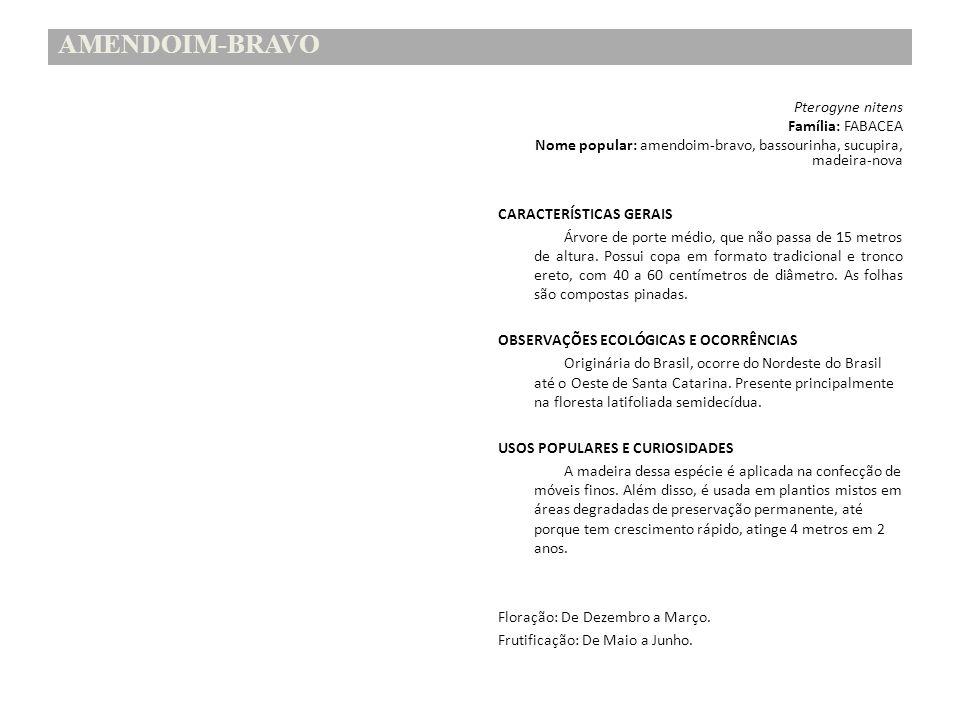 AMENDOIM-BRAVO Pterogyne nitens Família: FABACEA Nome popular: amendoim-bravo, bassourinha, sucupira, madeira-nova CARACTERÍSTICAS GERAIS Árvore de po