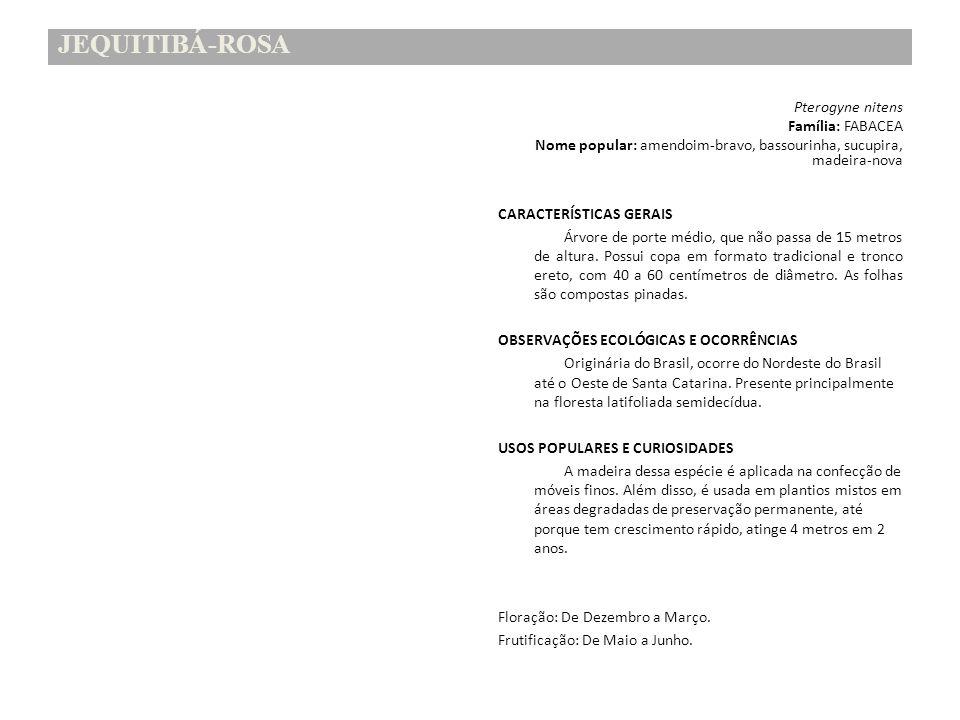 JEQUITIBÁ-ROSA Pterogyne nitens Família: FABACEA Nome popular: amendoim-bravo, bassourinha, sucupira, madeira-nova CARACTERÍSTICAS GERAIS Árvore de po