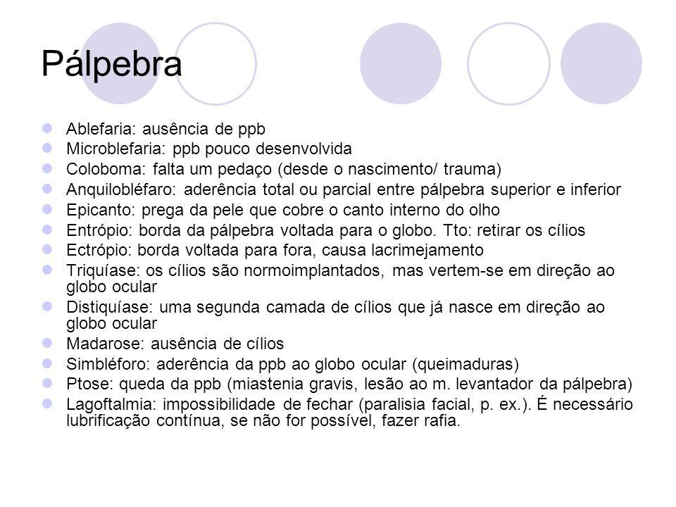 Pálpebra Ablefaria: ausência de ppb Microblefaria: ppb pouco desenvolvida Coloboma: falta um pedaço (desde o nascimento/ trauma) Anquilobléfaro: aderê
