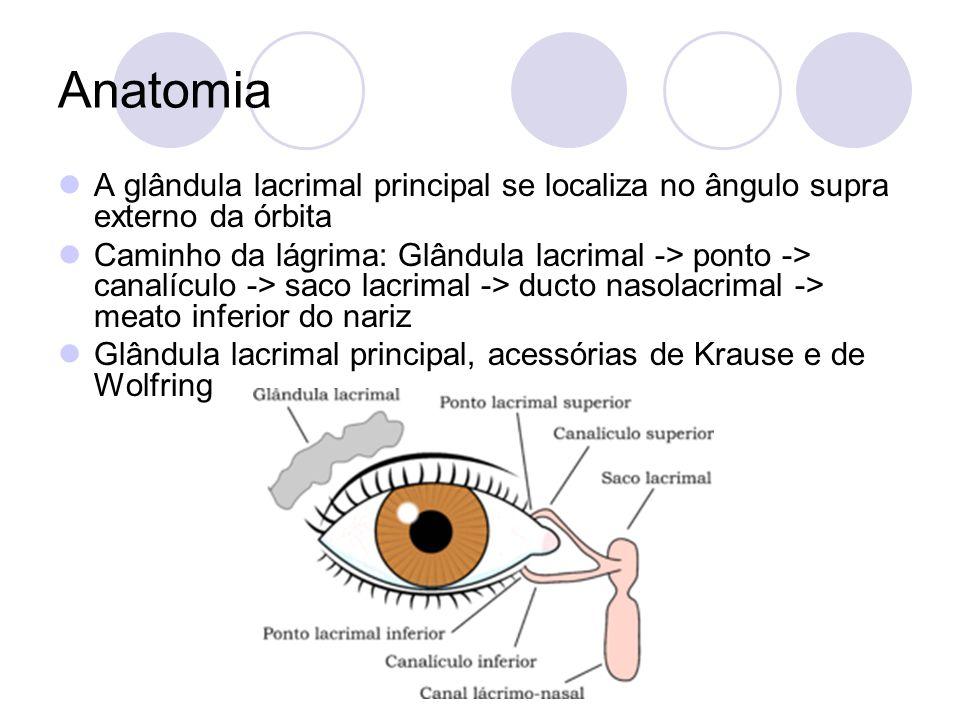 Anatomia A glândula lacrimal principal se localiza no ângulo supra externo da órbita Caminho da lágrima: Glândula lacrimal -> ponto -> canalículo -> s