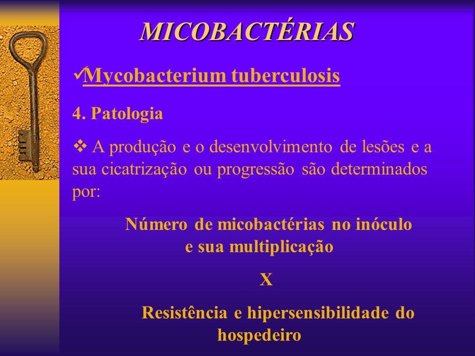 MICOBACTÉRIAS Mycobacterium tuberculosis 4. Patologia A produção e o desenvolvimento de lesões e a sua cicatrização ou progressão são determinados por