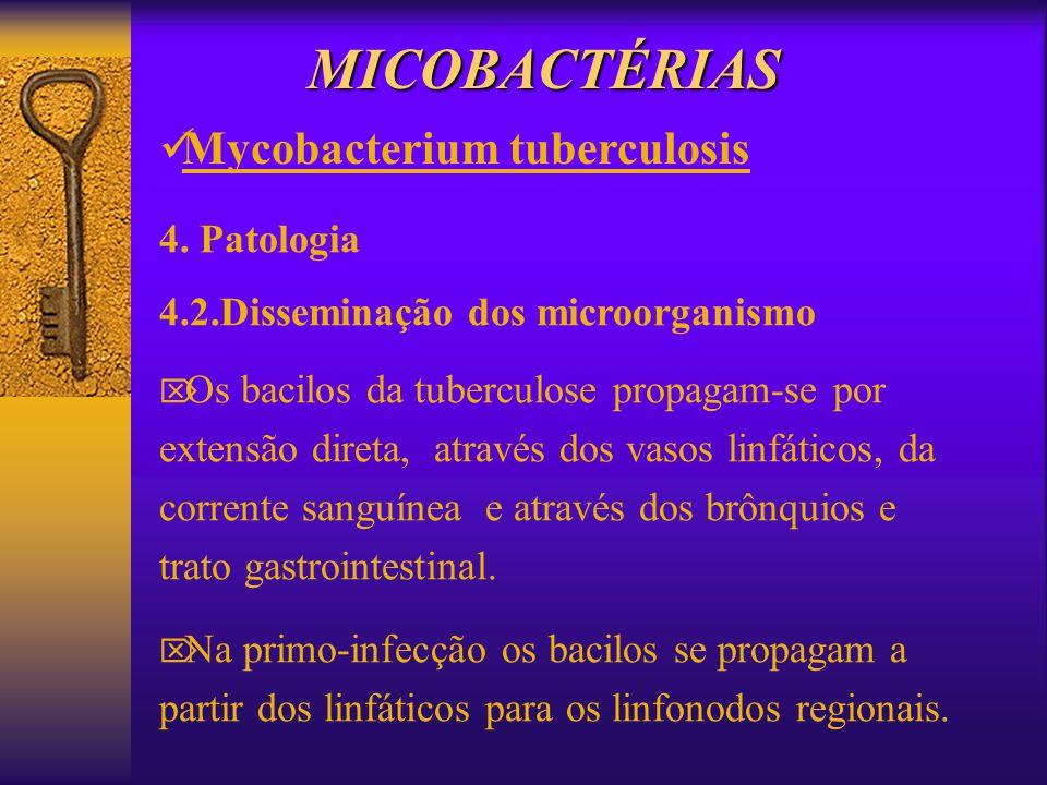MICOBACTÉRIAS 4. Patologia 4.2.Disseminação dos microorganismo Os bacilos da tuberculose propagam-se por extensão direta, através dos vasos linfáticos