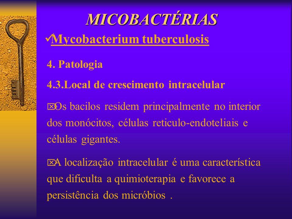 MICOBACTÉRIAS Mycobacterium tuberculosis 4. Patologia 4.3.Local de crescimento intracelular Os bacilos residem principalmente no interior dos monócito