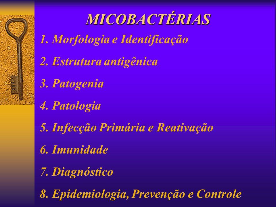 MICOBACTÉRIAS 1. Morfologia e Identificação 2. Estrutura antigênica 3. Patogenia 4. Patologia 5. Infecção Primária e Reativação 6. Imunidade 7. Diagnó