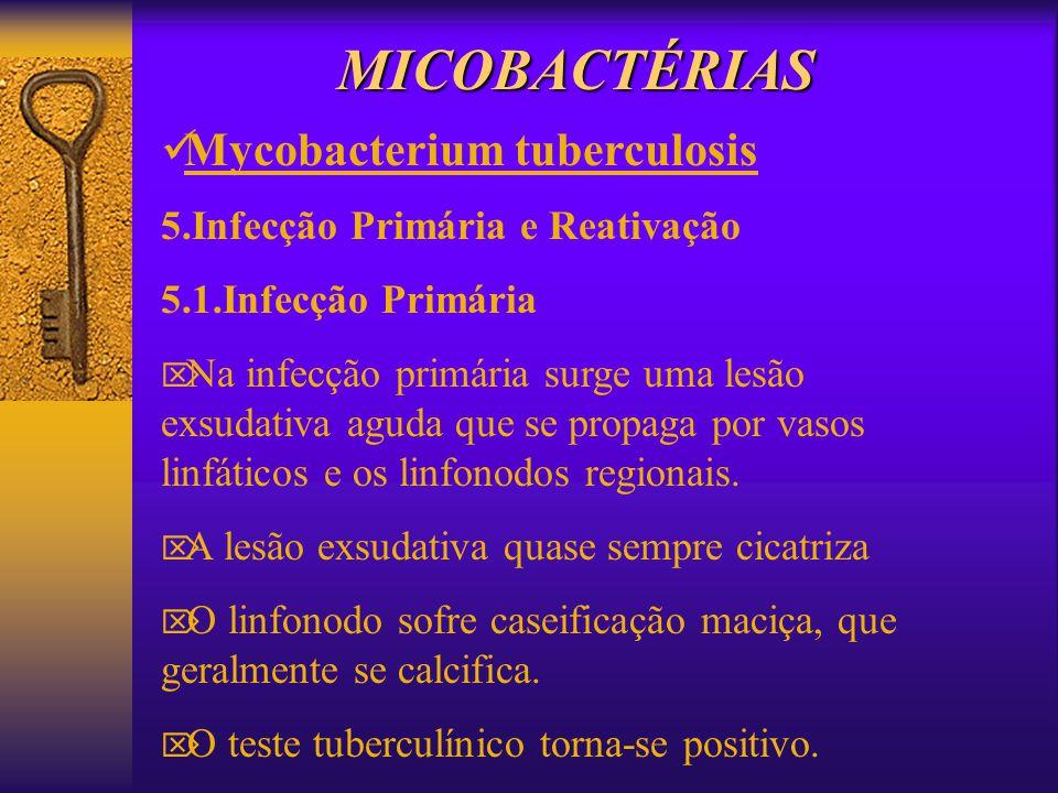 MICOBACTÉRIAS 5.Infecção Primária e Reativação 5.1.Infecção Primária Na infecção primária surge uma lesão exsudativa aguda que se propaga por vasos li