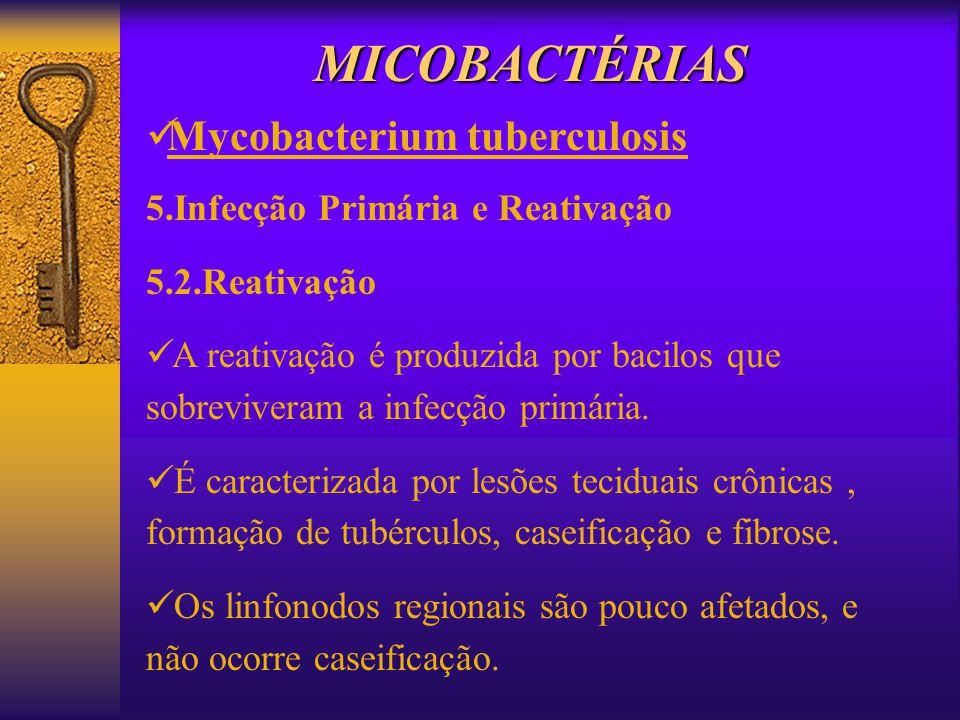 5.Infecção Primária e Reativação 5.2.Reativação A reativação é produzida por bacilos que sobreviveram a infecção primária. É caracterizada por lesões