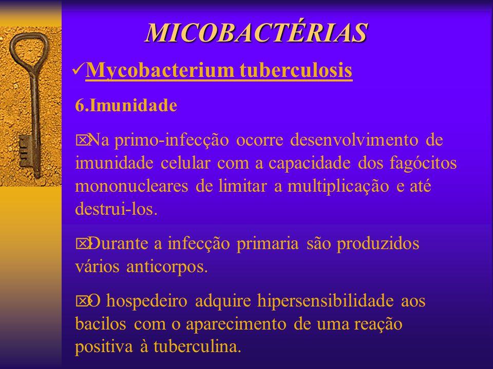 MICOBACTÉRIAS 6.Imunidade Na primo-infecção ocorre desenvolvimento de imunidade celular com a capacidade dos fagócitos mononucleares de limitar a mult