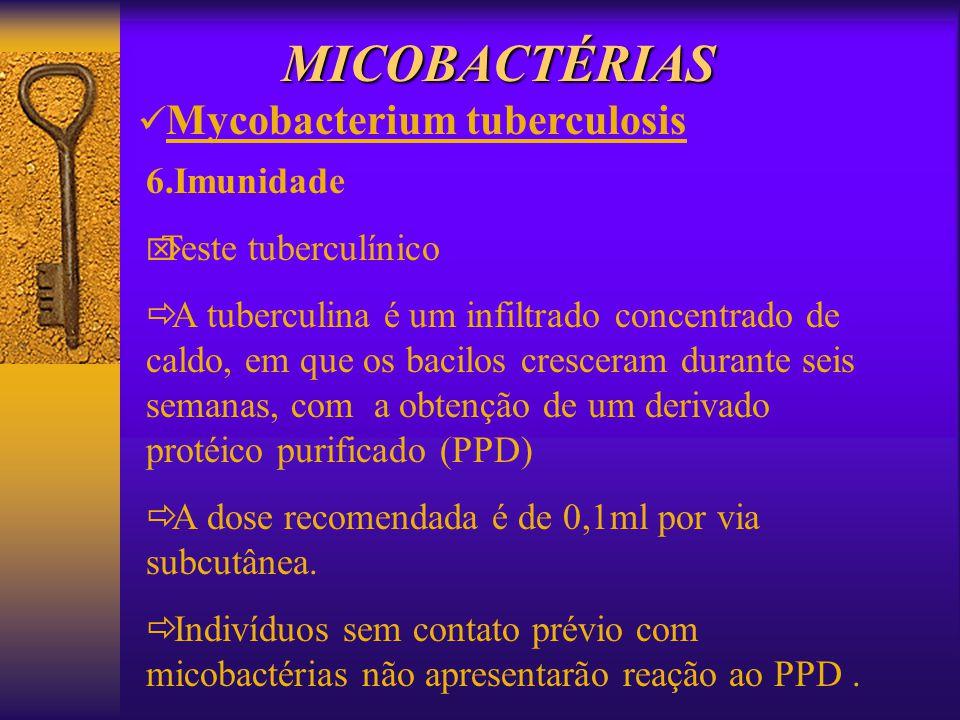 MICOBACTÉRIAS Mycobacterium tuberculosis 6.Imunidade Teste tuberculínico A tuberculina é um infiltrado concentrado de caldo, em que os bacilos crescer