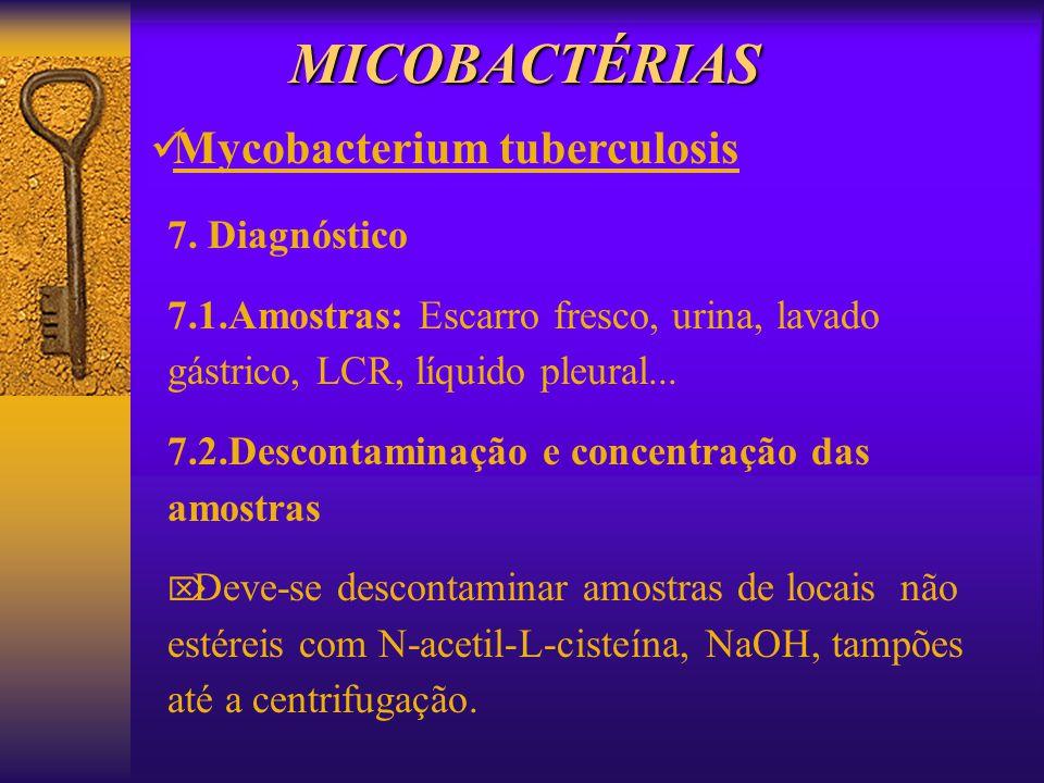 MICOBACTÉRIAS Mycobacterium tuberculosis 7. Diagnóstico 7.1.Amostras: Escarro fresco, urina, lavado gástrico, LCR, líquido pleural... 7.2.Descontamina