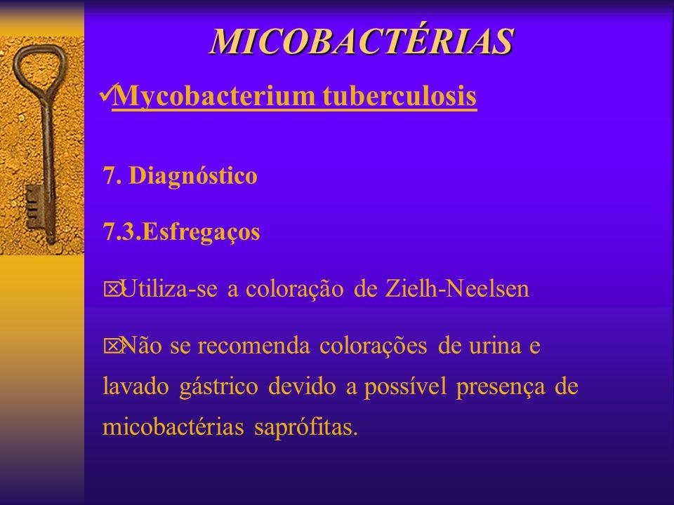 MICOBACTÉRIAS Mycobacterium tuberculosis 7. Diagnóstico 7.3.Esfregaços Utiliza-se a coloração de Zielh-Neelsen Não se recomenda colorações de urina e