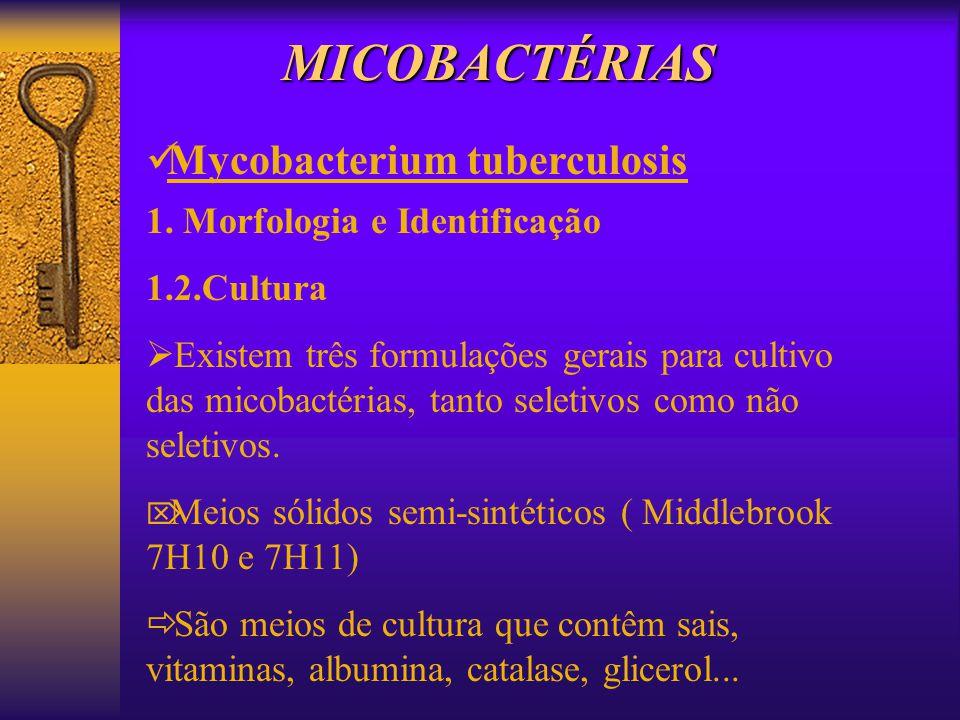 MICOBACTÉRIAS Mycobacterium tuberculosis 1. Morfologia e Identificação 1.2.Cultura Existem três formulações gerais para cultivo das micobactérias, tan