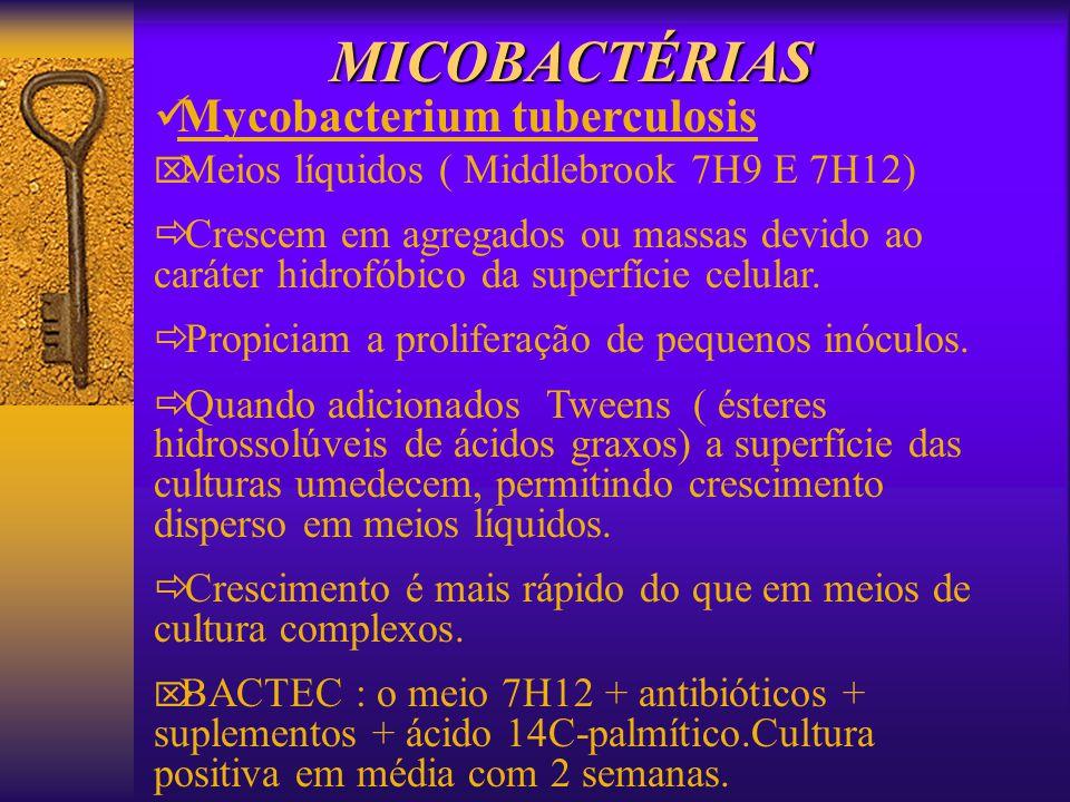 MICOBACTÉRIAS Mycobacterium tuberculosis Meios líquidos ( Middlebrook 7H9 E 7H12) Crescem em agregados ou massas devido ao caráter hidrofóbico da supe
