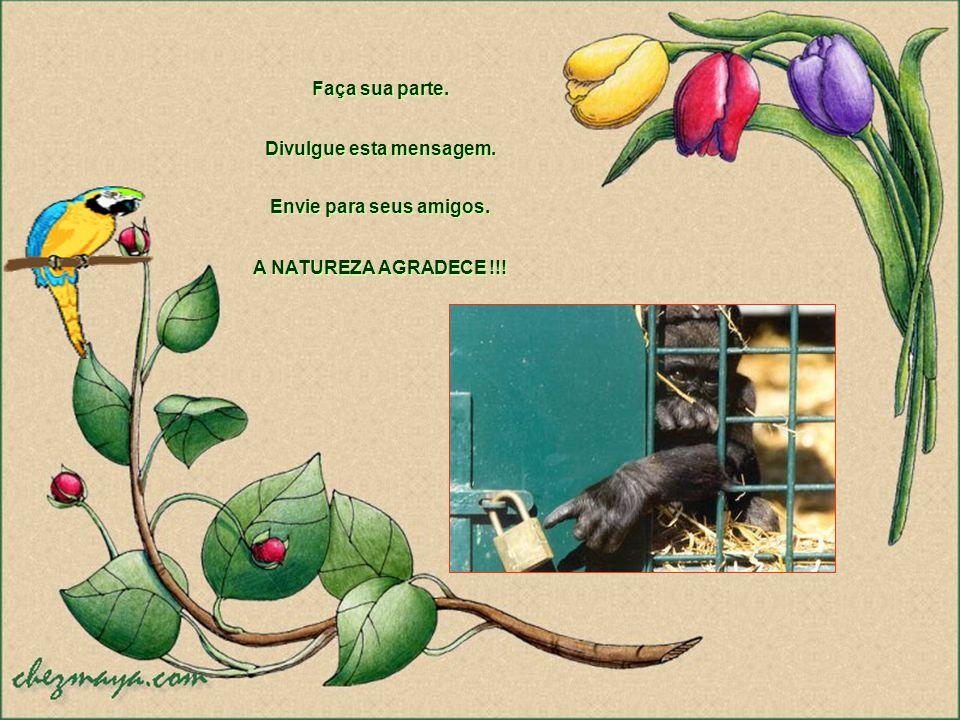 Algumas espécies brasileiras já foram extintas, desapareceram para sempre na natureza. E quando se elimina uma espécie, morre com ela toda a sua histó