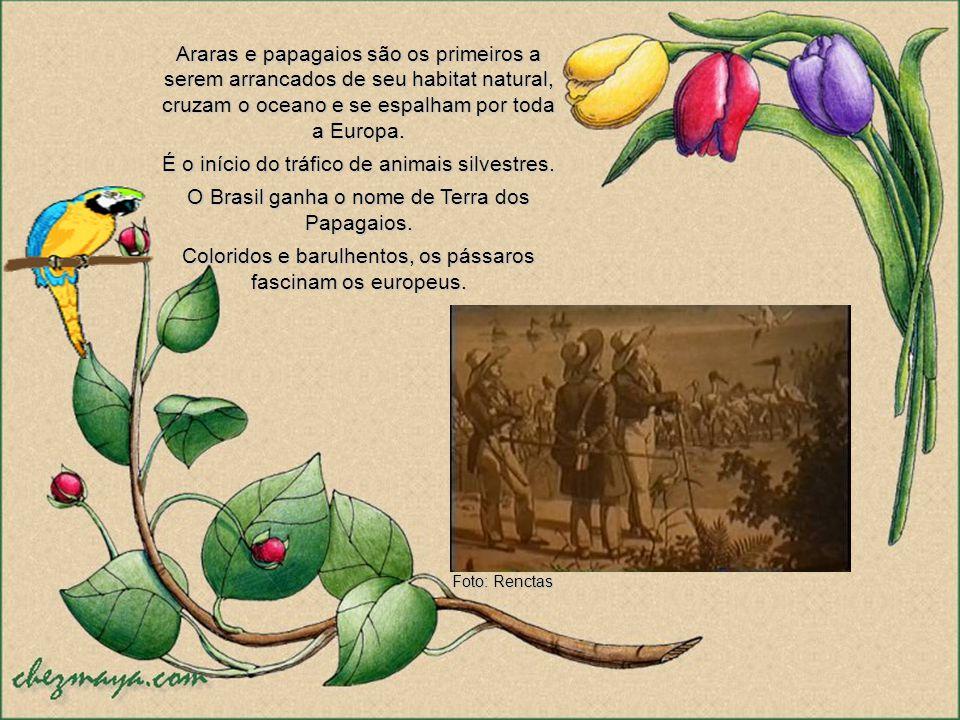 Ao longo dos anos o contato com os colonizadores mudou o rumo dessa história. Começava então, a triste exploração comercial da fauna silvestre brasile