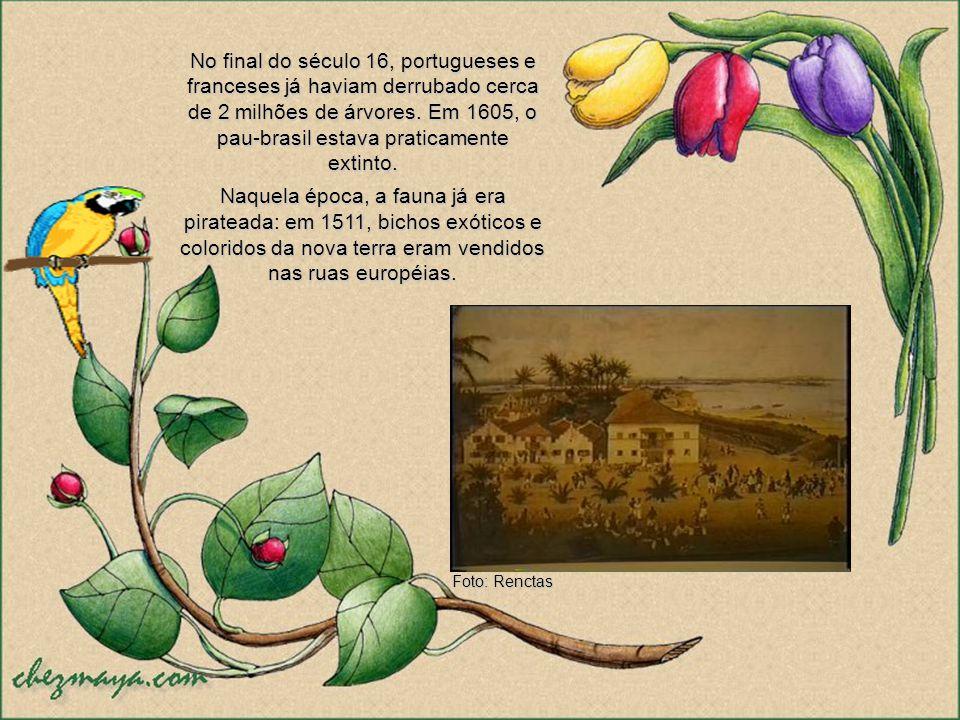 Ao longo da história, as riquezas naturais do Brasil sempre foram vistas sob o prisma da cobiça. O primeiro grande saque, que abriu as portas para a e