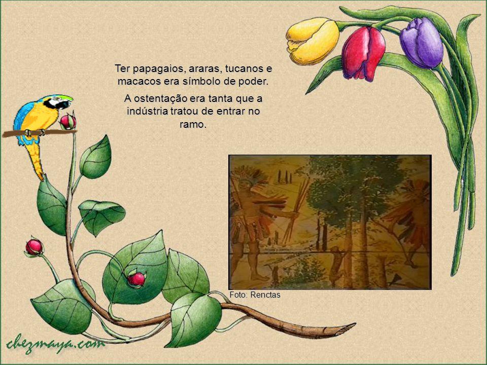 No final do século 16, portugueses e franceses já haviam derrubado cerca de 2 milhões de árvores. Em 1605, o pau-brasil estava praticamente extinto. N