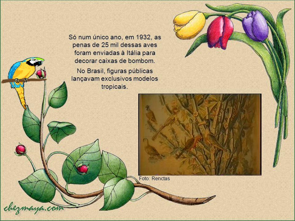 Penas de garças e de guarás, colhidas na ilha de Marajó, eram exportadas aos montes para a Europa e os Estados Unidos, onde serviam de adorno para cha
