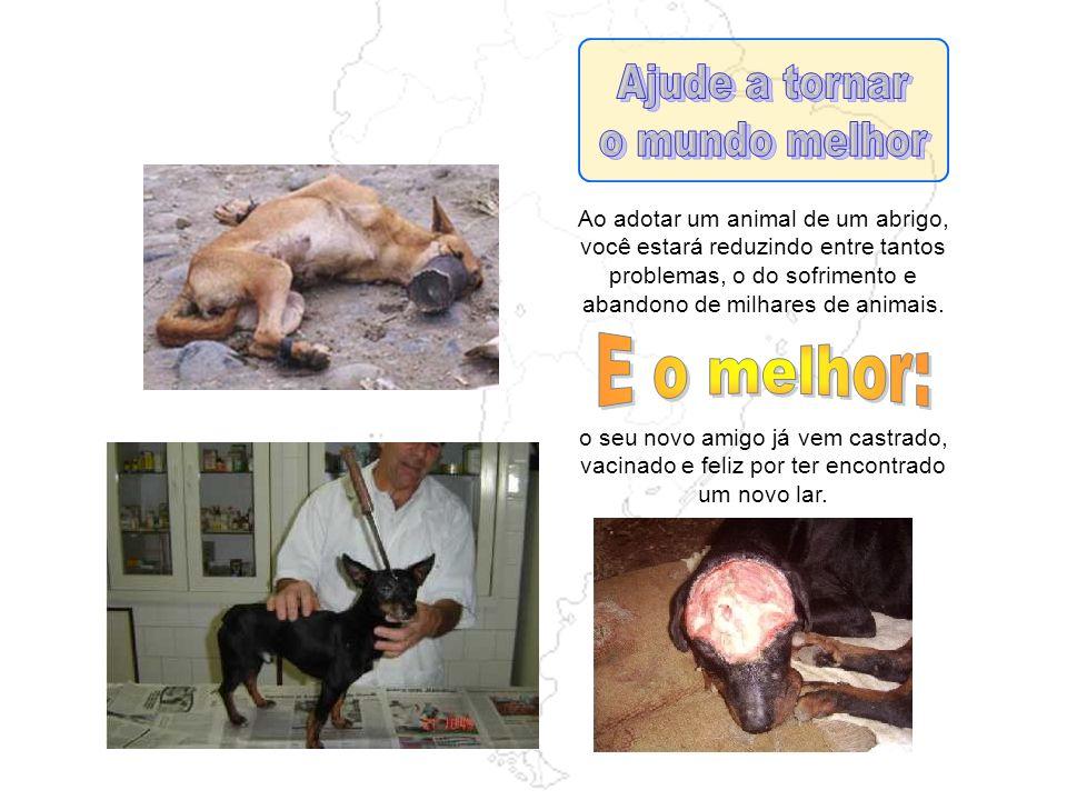 Os pet-shops visam exclusivamente ao lucro. Os abrigos trabalham pela compaixão dos animais.