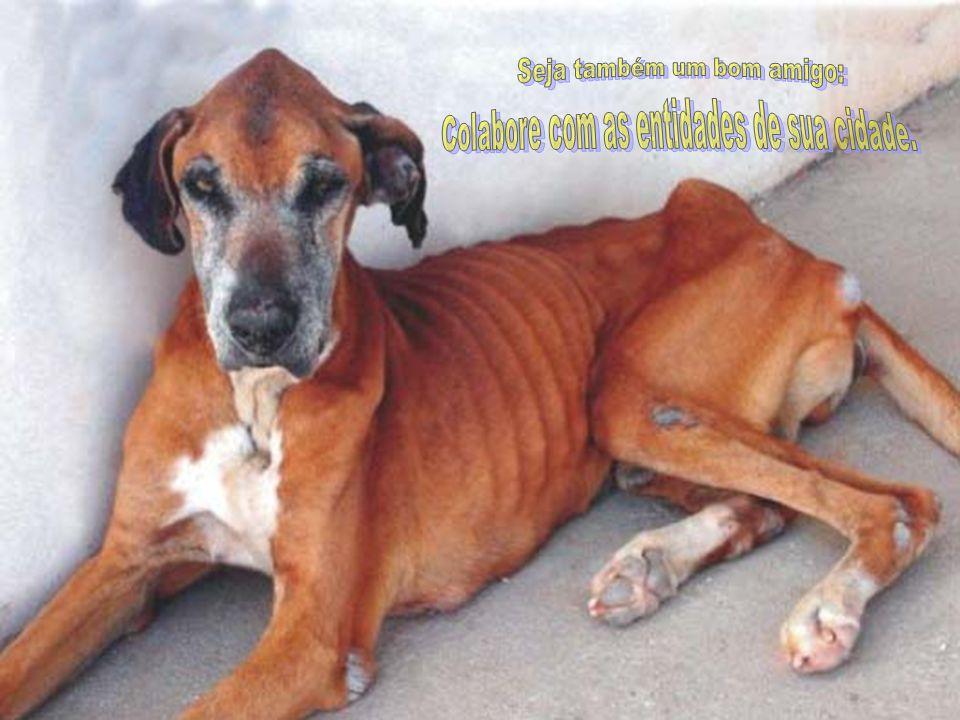 Algumas entidades Protetoras dos Animais que você pode colaborar com dinheiro, materiais, voluntariado e adoção: IMEPA ARPA UDEVA SOAMA SOS Animal GAB