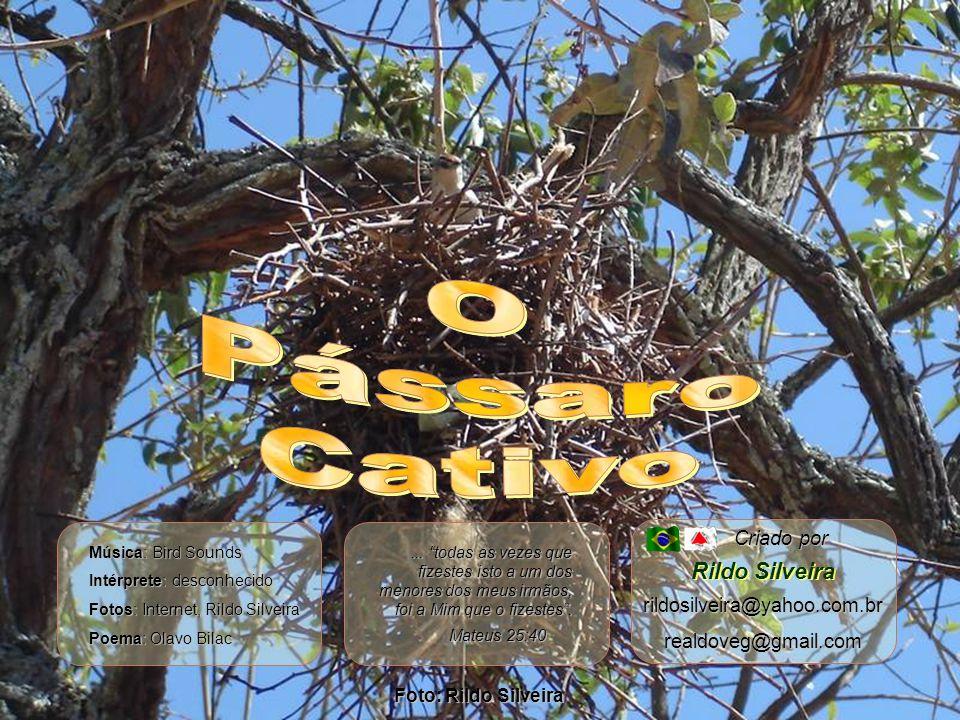Foto: Rildo Silveira Criado por rildosilveira@yahoo.com.brrealdoveg@gmail.com Rildo Silveira Mateus 25:40...