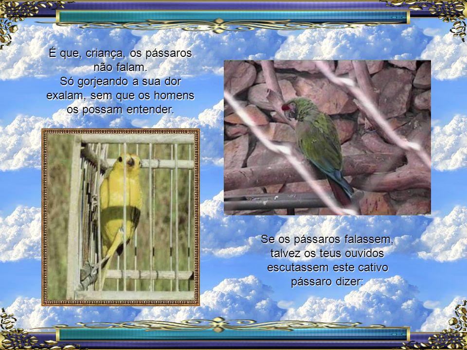 Se os pássaros falassem, talvez os teus ouvidos escutassem este cativo pássaro dizer: É que, criança, os pássaros não falam.