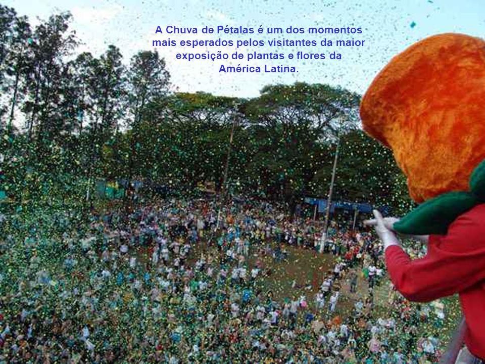 Os visitantes da Expoflora, que se emocionam com a tradicional Chuva de Pétalas, não têm idéia do ritual que a antecede. Os preparativos exigem dedica