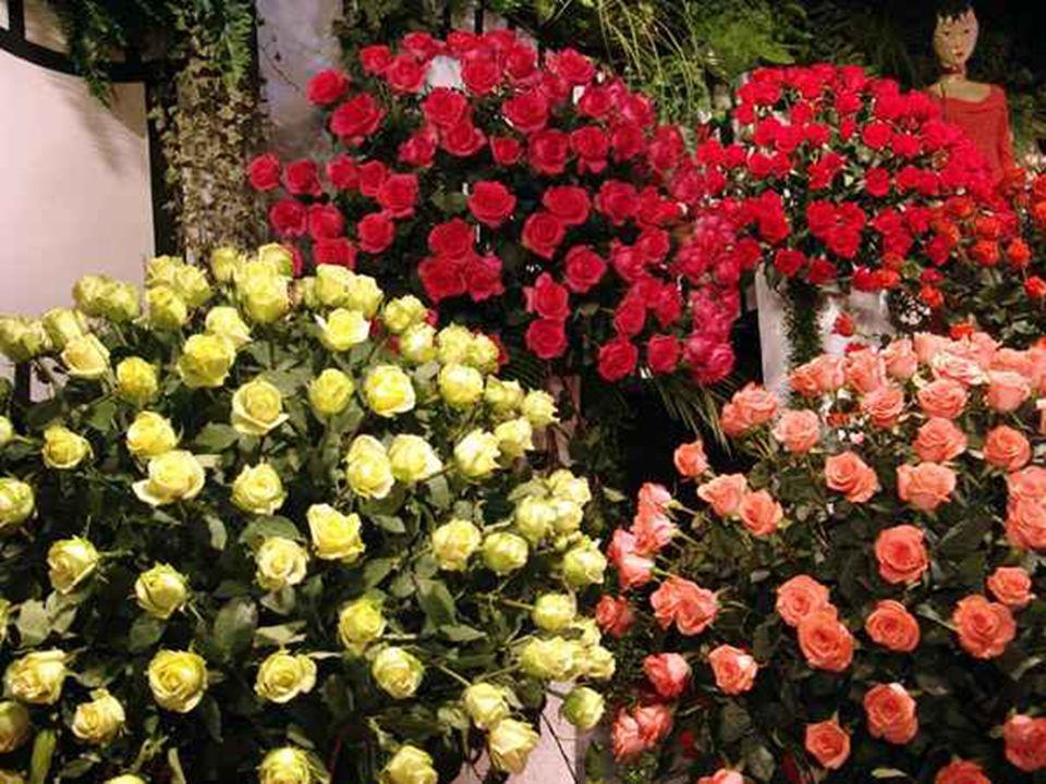 A Chuva de Pétalas é um dos momentos mais esperados pelos visitantes da maior exposição de plantas e flores da América Latina.