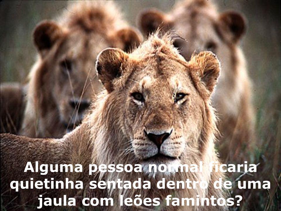 Alguma pessoa normal ficaria quietinha sentada dentro de uma jaula com leões famintos?