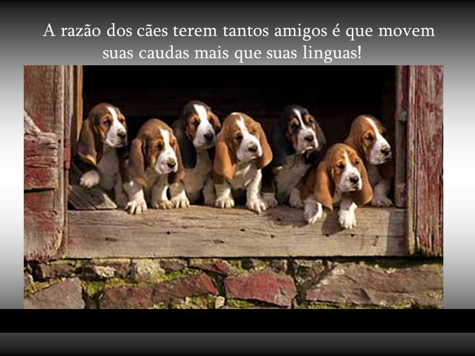Os cães não são tudo em nossa vida, apenas a completam. Roger Caras