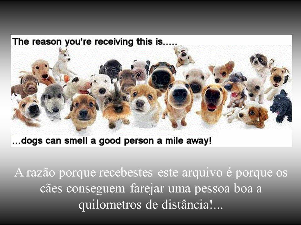 A razão dos cães terem tantos amigos é que movem suas caudas mais que suas linguas!