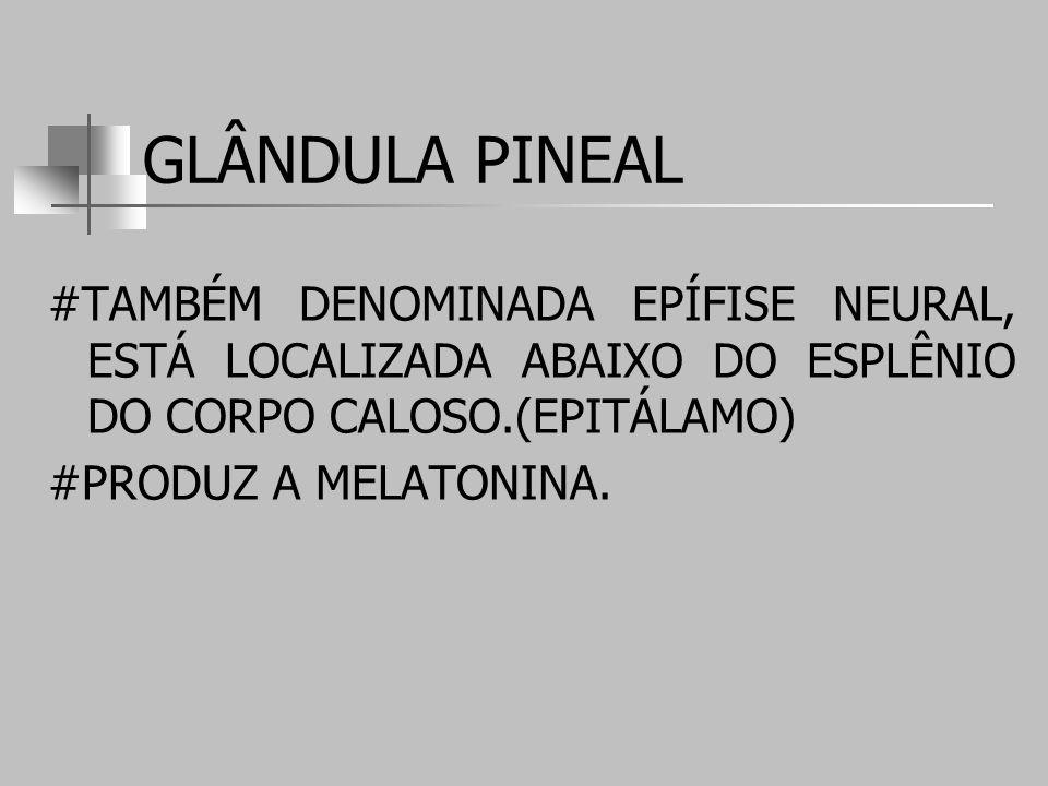 GLÂNDULA PINEAL #TAMBÉM DENOMINADA EPÍFISE NEURAL, ESTÁ LOCALIZADA ABAIXO DO ESPLÊNIO DO CORPO CALOSO.(EPITÁLAMO) #PRODUZ A MELATONINA.